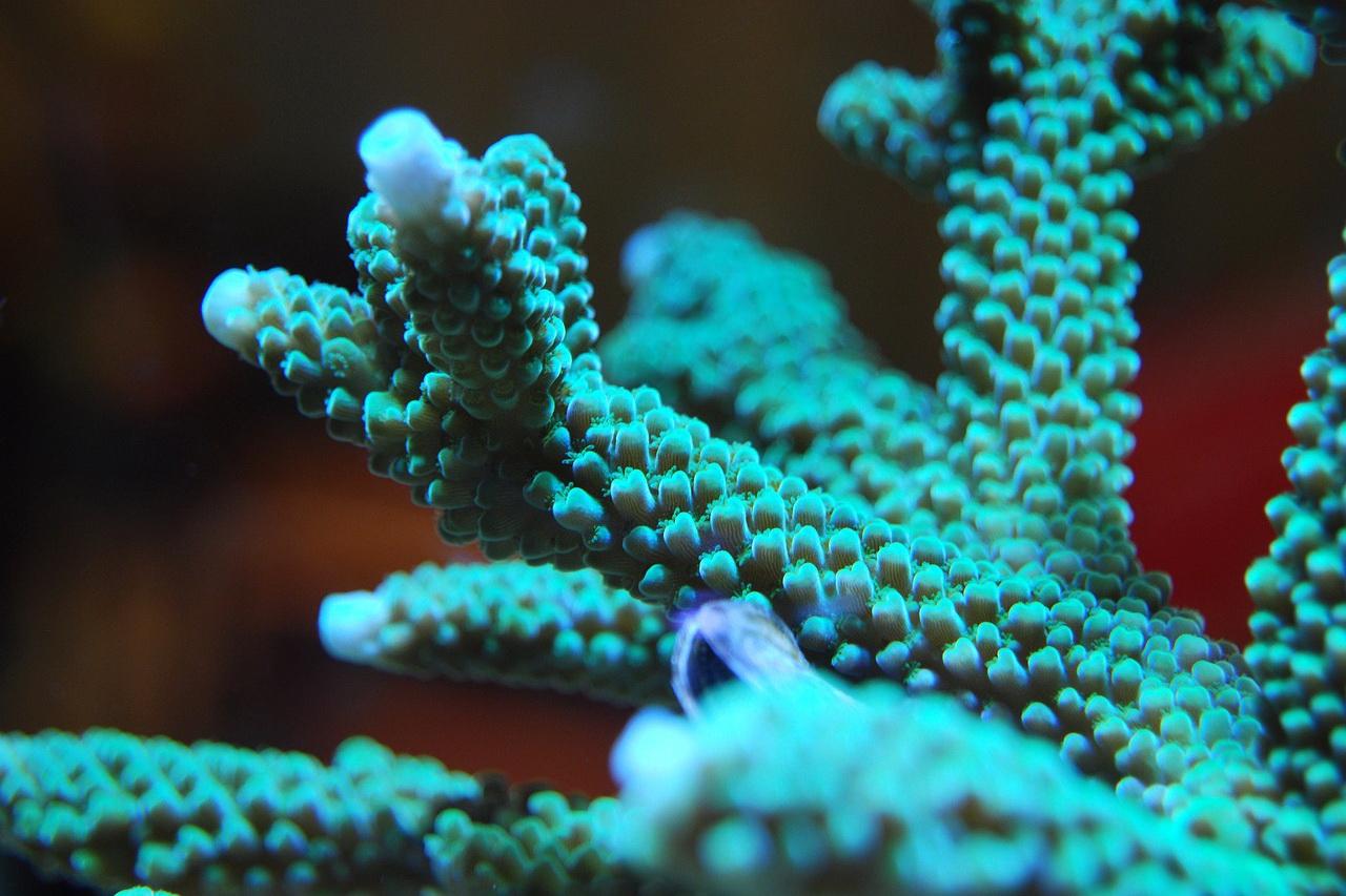 """Deep Sea Mining May Destroy the Ecosystem"""